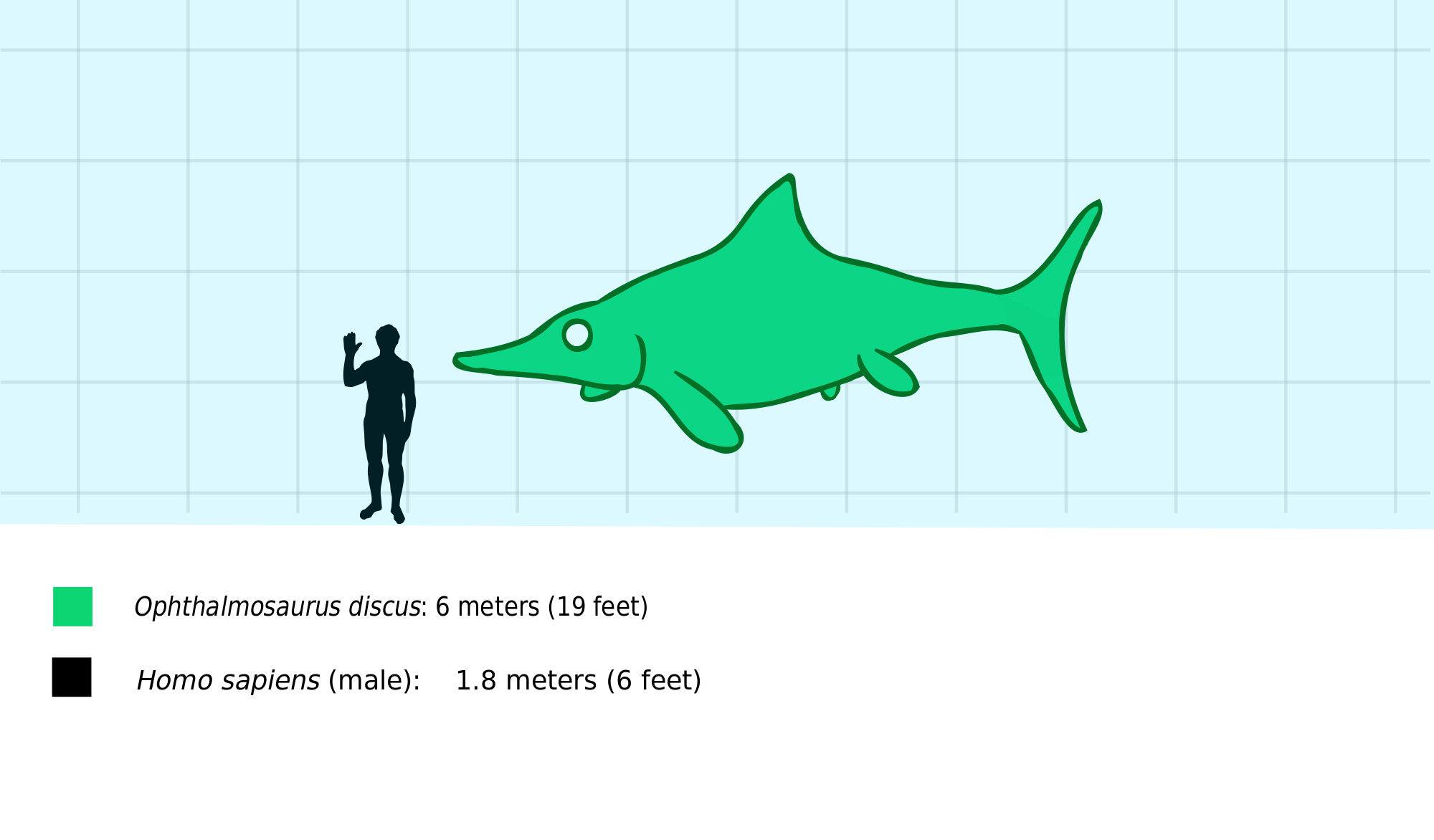 Discus Fish svg #4, Download drawings