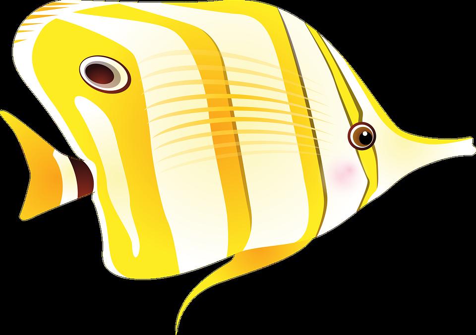 Discus Fish svg #2, Download drawings