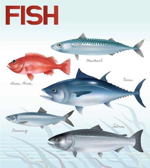 Discus Fish svg #9, Download drawings