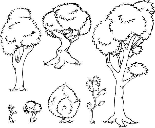 Dividivi clipart #14, Download drawings