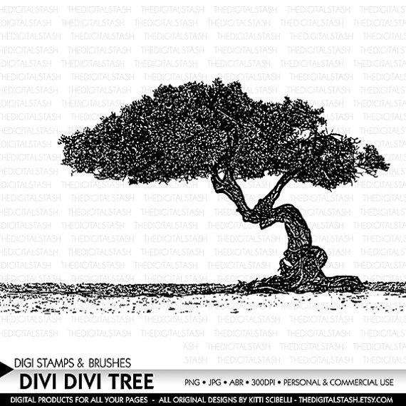 Dividivi clipart #3, Download drawings