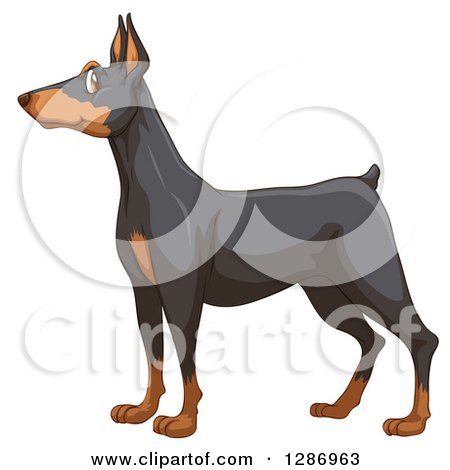 Doberman Pinscher clipart #11, Download drawings