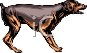Doberman Pinscher clipart #8, Download drawings