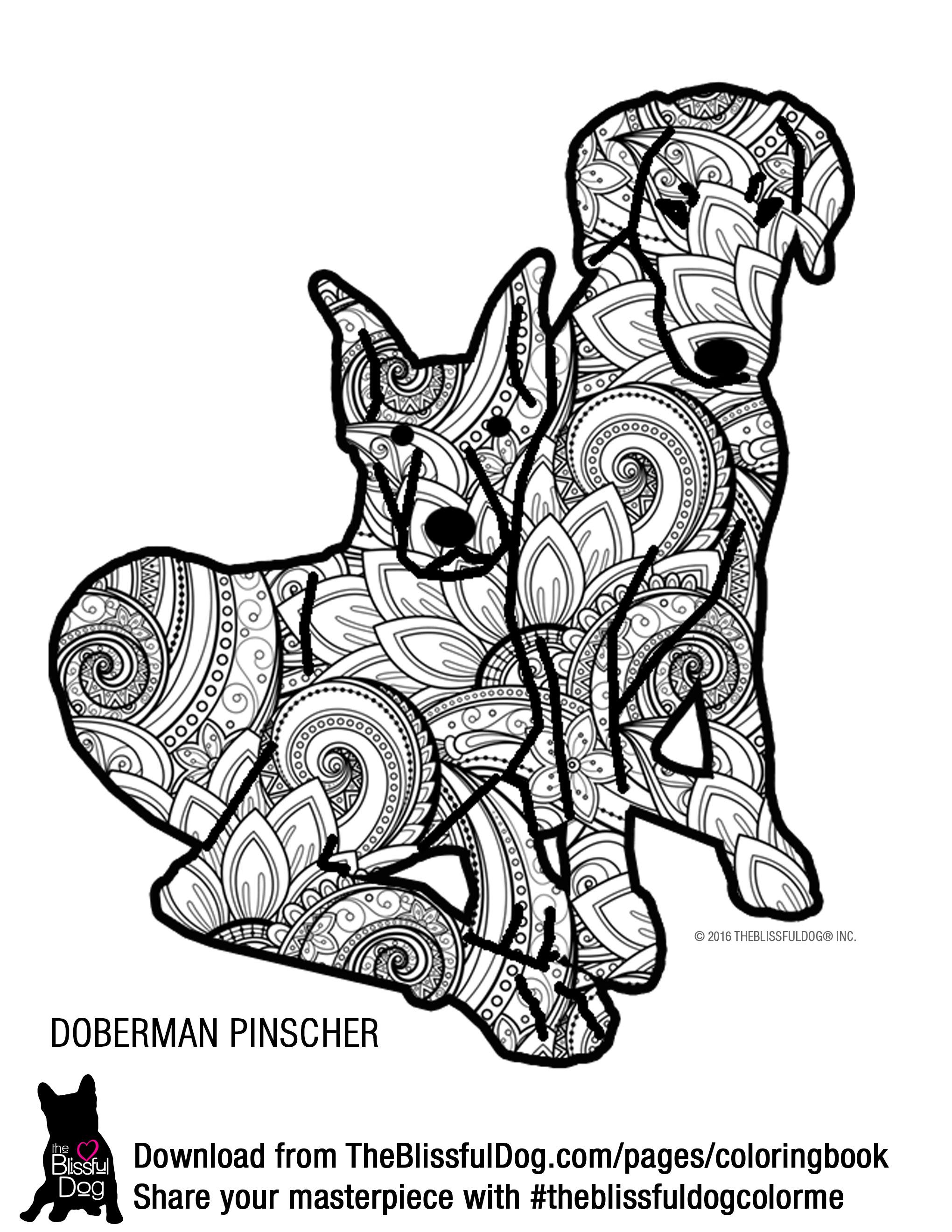 Doberman Pinscher coloring #5, Download drawings