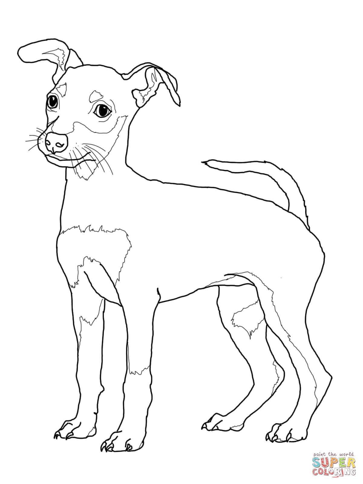 German Pinscher coloring #17, Download drawings