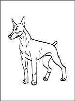 Doberman Pinscher coloring #7, Download drawings
