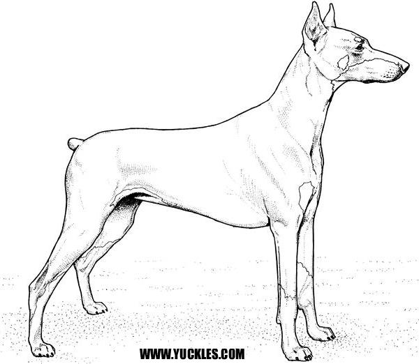 Doberman Pinscher coloring #19, Download drawings