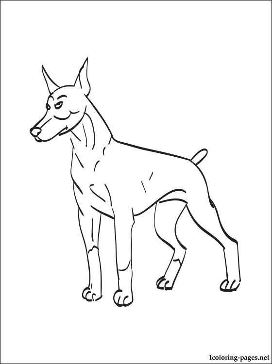 Doberman Pinscher coloring #2, Download drawings