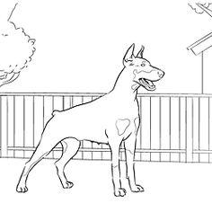 Doberman Pinscher coloring #16, Download drawings