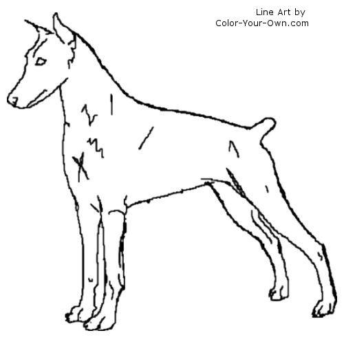 Doberman Pinscher coloring #18, Download drawings
