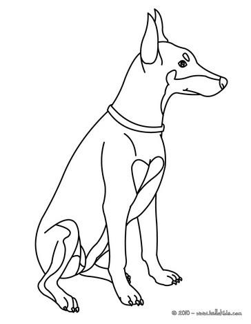 Doberman Pinscher coloring #14, Download drawings