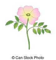 Dogrose clipart #11, Download drawings