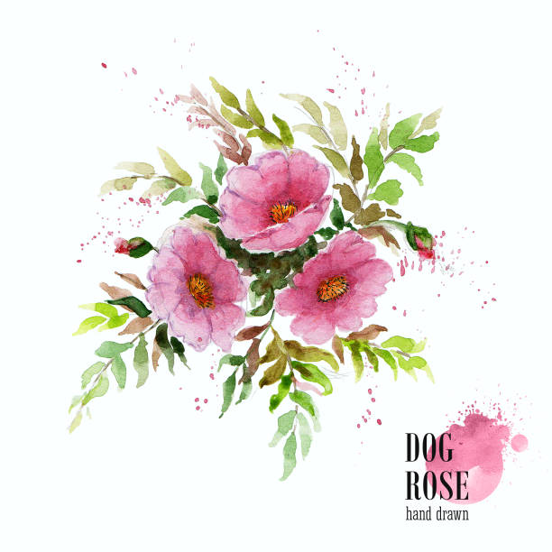 Dogrose clipart #7, Download drawings
