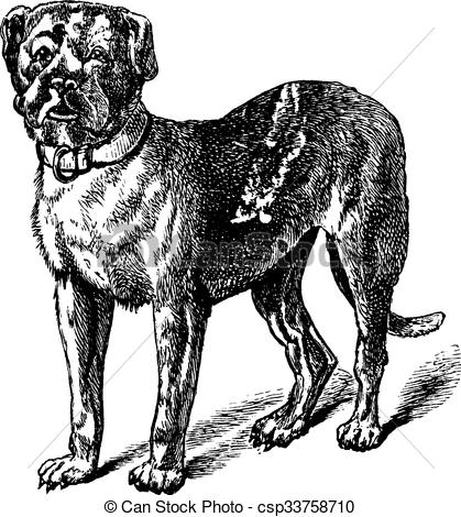 Dogue De Bordeaux clipart #12, Download drawings