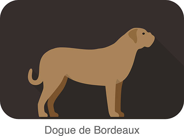 Dogue De Bordeaux clipart #8, Download drawings