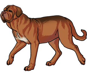 Dogue De Bordeaux clipart #18, Download drawings