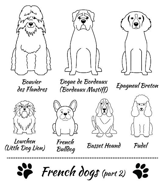 Dogue De Bordeaux clipart #13, Download drawings