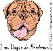 Dogue De Bordeaux clipart #14, Download drawings