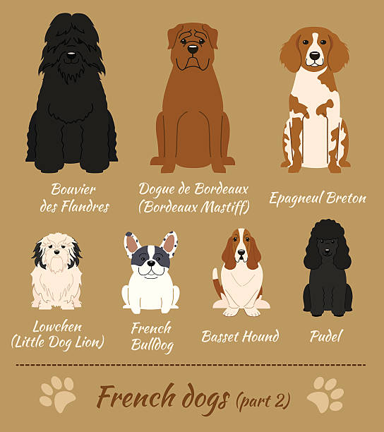 Dogue De Bordeaux clipart #15, Download drawings