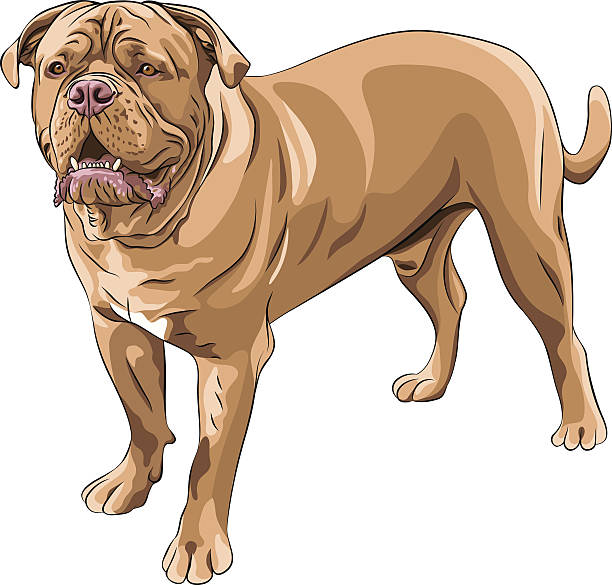 Dogue De Bordeaux clipart #9, Download drawings