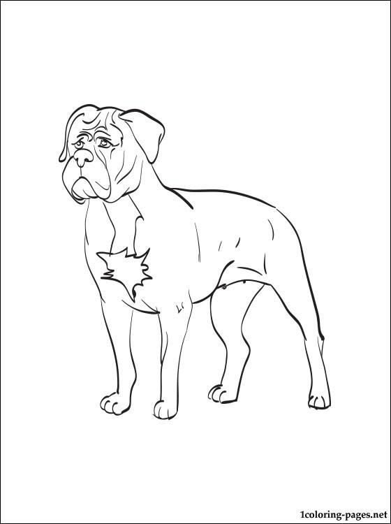 Dogue De Bordeaux coloring #8, Download drawings