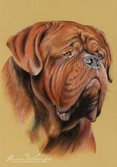 Dogue De Bordeaux coloring #10, Download drawings