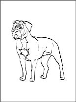 Dogue De Bordeaux coloring #18, Download drawings