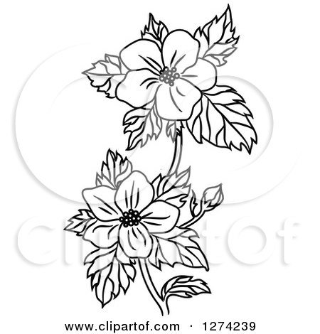 Dogwood clipart #4, Download drawings