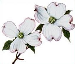 Dogwood clipart #3, Download drawings