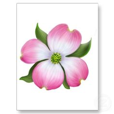 Dogwood clipart #6, Download drawings
