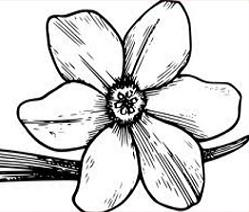 Dogwood clipart #5, Download drawings