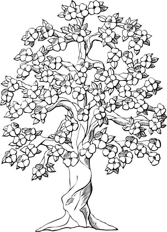 Dogwood coloring #4, Download drawings
