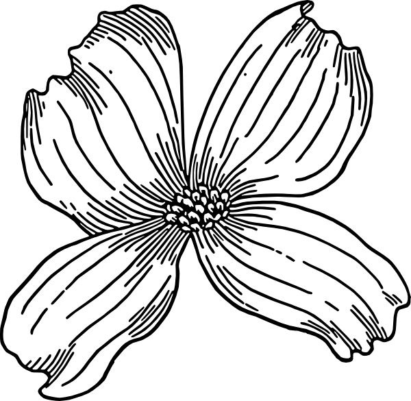 Dogwood svg #14, Download drawings