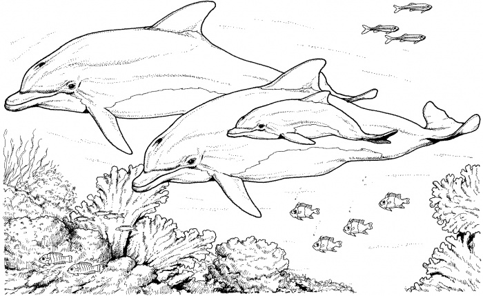 Dolphin coloring #8, Download drawings
