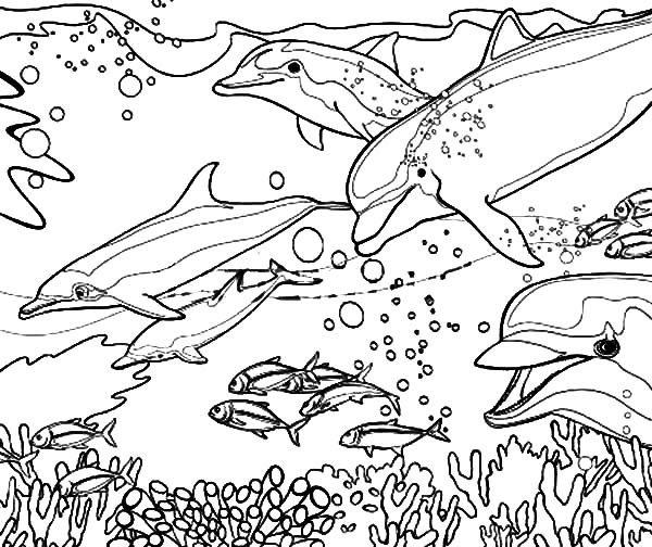 Dolphin coloring #19, Download drawings