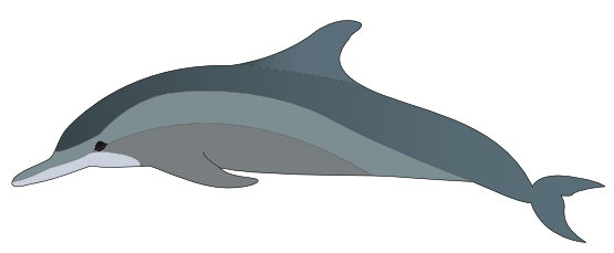 Dolphins clipart #8, Download drawings