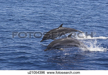 Dolphins Riding Bow clipart #20, Download drawings
