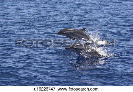Dolphins Riding Bow clipart #19, Download drawings