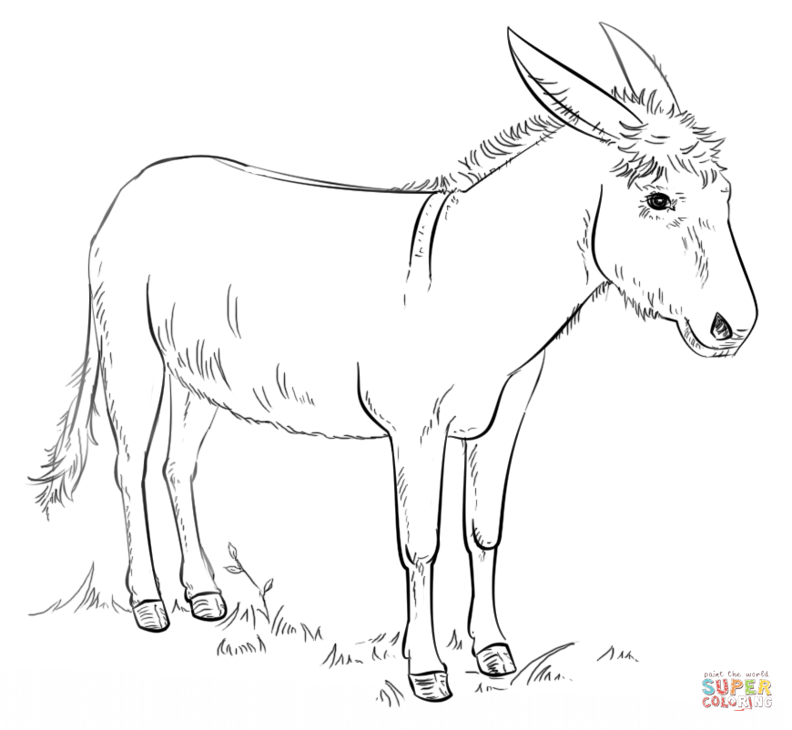 Donkey coloring #19, Download drawings