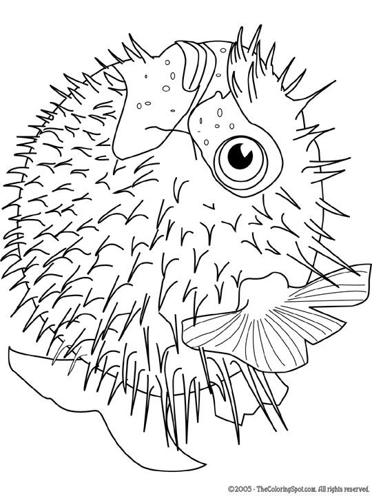 Dorade coloring #4, Download drawings