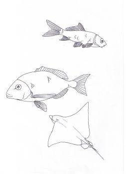 Dorade coloring #13, Download drawings