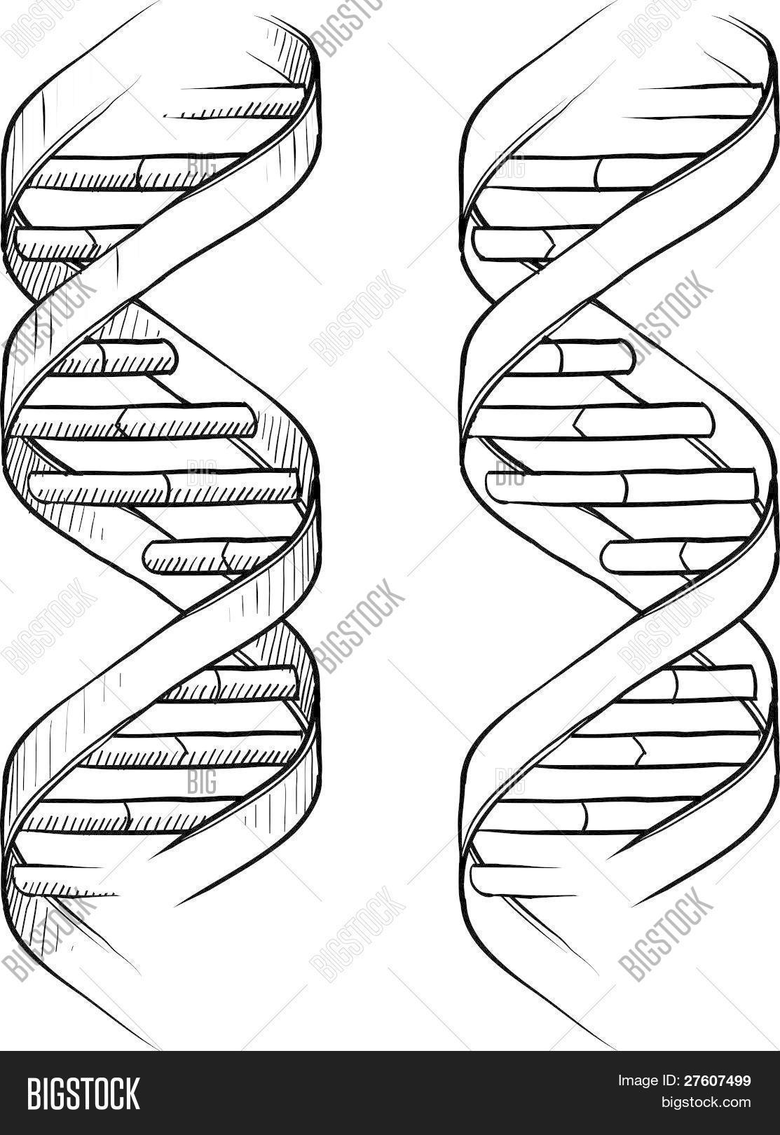 Double Helix coloring #2, Download drawings