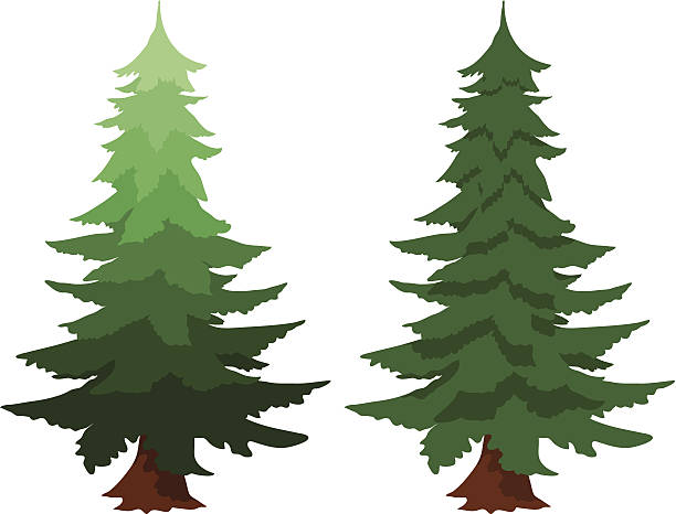 Douglas Fir Trees clipart #10, Download drawings