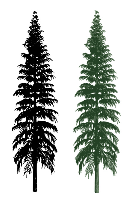 Douglas Fir Trees clipart #9, Download drawings