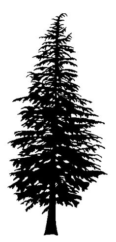 Douglas Fir Trees clipart #4, Download drawings
