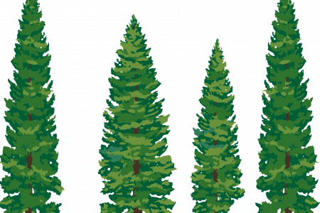 Douglas Fir Trees clipart #3, Download drawings