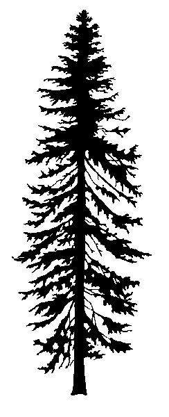Douglas Fir Trees clipart #2, Download drawings