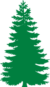 Douglas Fir Trees clipart #15, Download drawings
