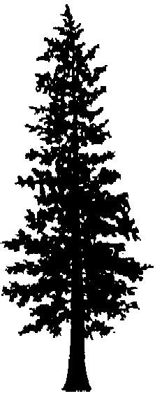 Douglas Fir Trees clipart #1, Download drawings