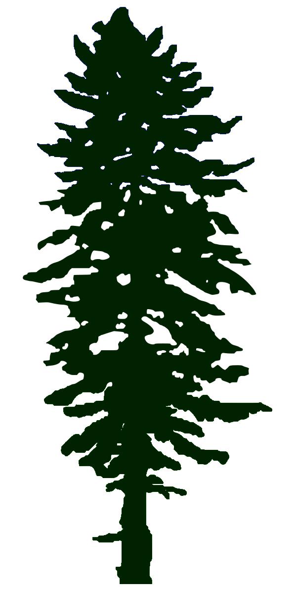 Douglas Fir Trees svg #16, Download drawings